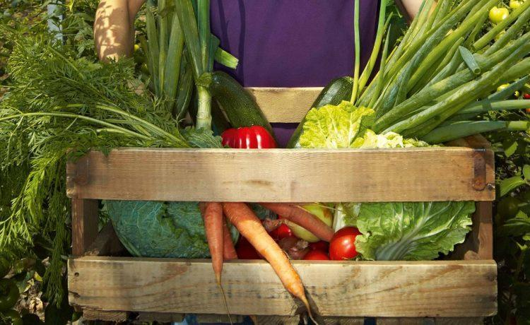 Ce avantaje va ofera cultivarea legumelor?